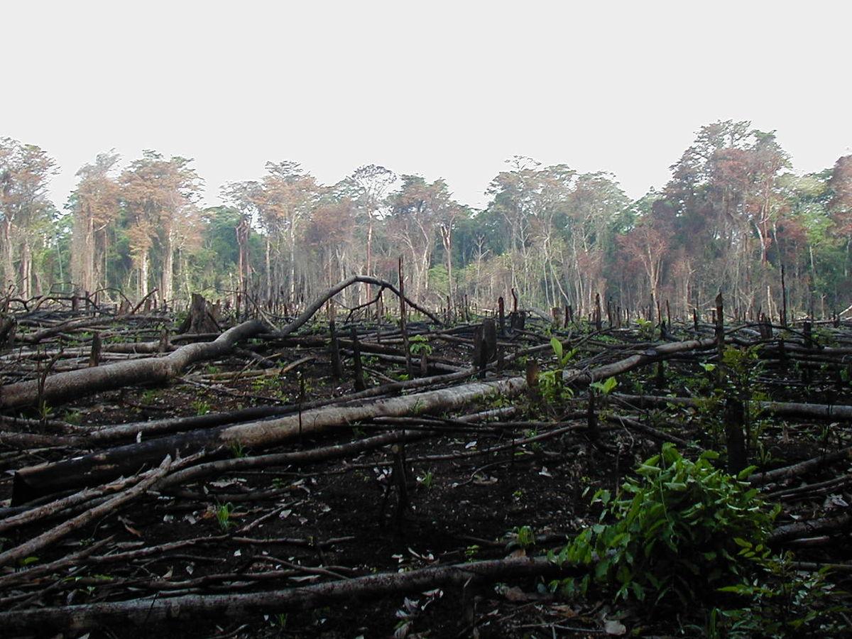 معضلات محیط زیستی